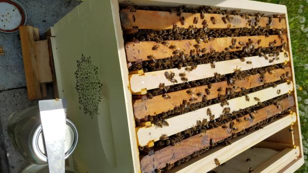 lang bees hive inside